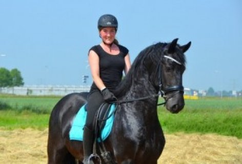 AMAZING AND ENERGETIC FRIESIANT HORSE FOR SALE.. ,.