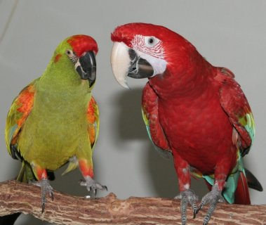 Our parrots are in very loving
