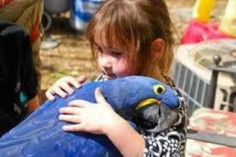 صور Beautiful and Talking Hyacinth Macaw Parrots for Sale 1