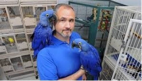 Lovely talking hyacinth macaws parrots ready for good home !!