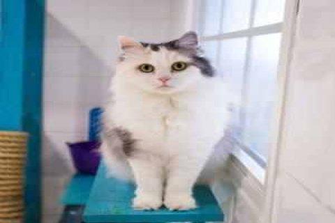 looking for adopt cat مطلوب قطة للتبني