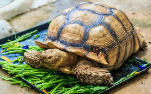 Playful tortoises For Sale