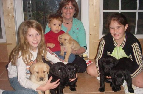 Male and Female Labrador puppies For Rehoming
