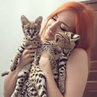 Home bred serval and savannah kittens available.