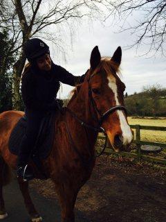 Male and Female Arabian Horse For Salee