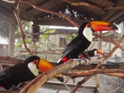 Parrots and Fresh laid Fertile Parrot Eggs