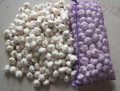 Good Quality of Pure White Garlic