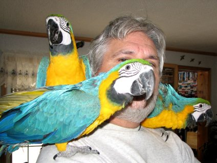 Gorgeous Home Raised Macaw Parrots For Sale