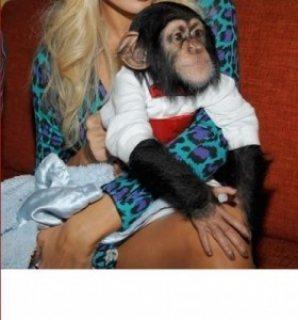 Healthy baby Chimpanzee.