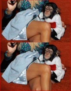 Cute Chimpanzee For sale