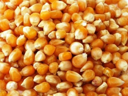 Grade A Yellow Corn / White Maize (Non GMO Yellow Corn)...+254770172338