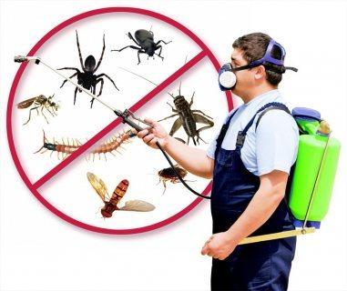 شركة نور المدينة  مكافحة حشرات  67657272