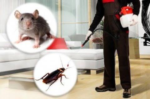 مكافحة حشرات 58852623