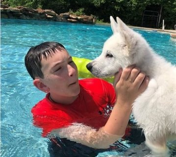 White German Shepherd puppy Available