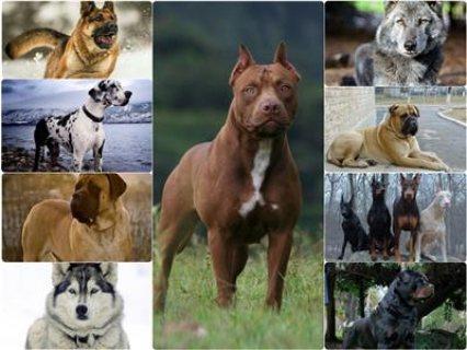 كلاب سلالة من اوكرانيا
