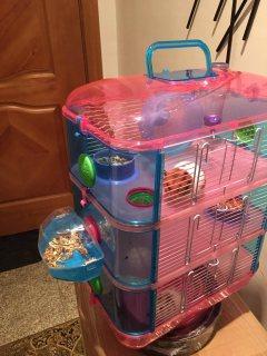 Hamster هامستر و القفص