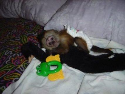 4 months Old Monkey