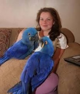 Twin Talking Macaw Parrots