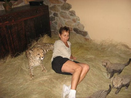 صور Cheetahs, White & Siberian tigers and lion cubs for sale  1