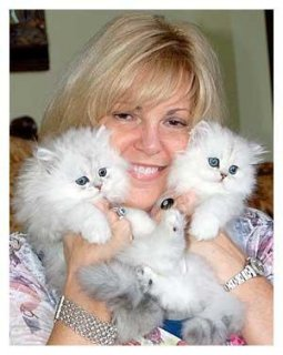 Adopt Super Cute Persian Kittens Now-12 Weeks Old