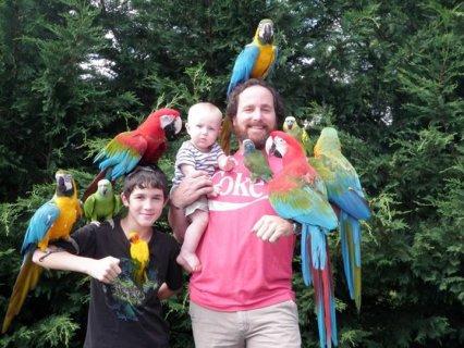 Tame &Friendly Parrots, Macaws, African Grey, Kea, Cockatoo, Ama