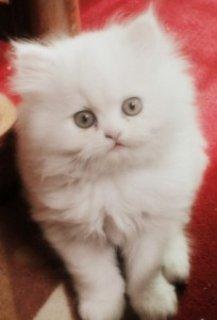 Sphynx Kittens for Sale in Soldotna
