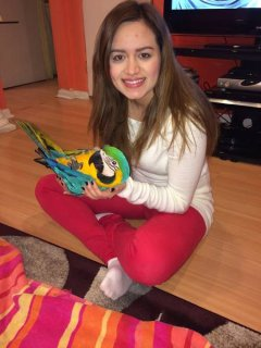 BLUE AND GOLD MACAW BABY BLACK FRIDAY SALE!!