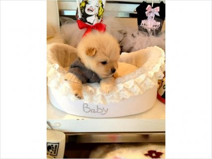 1Male And Female Adorable AKC Pomeranian Puppies