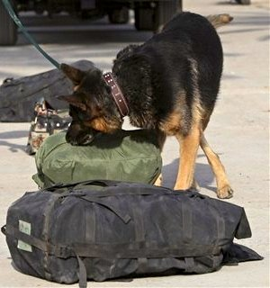 كلاب الكشف عن المتفجرات