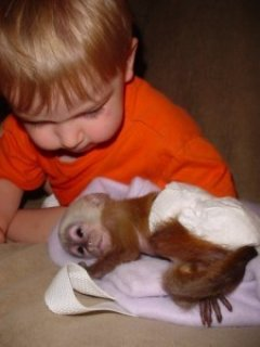 Tame Capuchin Monkey for Sale
