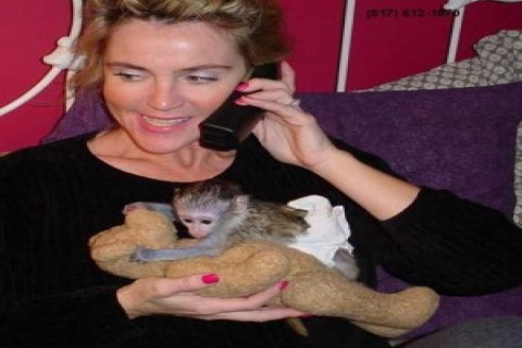 Lovely Capuchin Monkeys for Adoptionwer
