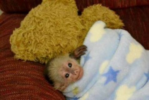 صور Gorgeous Monkey Ready for Adoption45 1