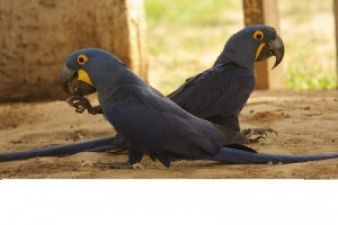 ADORABLE PARROTS FOR SALE