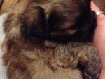 Jackhuhuha Puppies