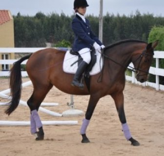 صور Well trained Arabian Horse	 1