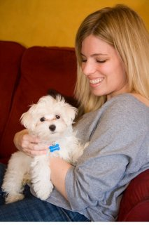 صور Wow Wow Teacup Maltese puppies for adoption	 1