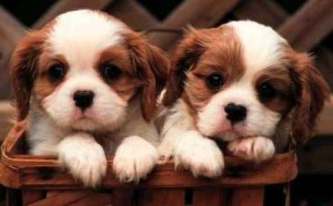 cute and adorable puppies ready for new homes