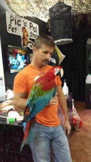 We are parrot breeders of high quality breeds and have