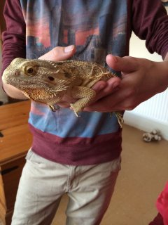 Two Very Friend Bearded Dragons With Unit Stand 6ft And Four Foo