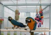 Beatiful Macaw parrots for sale