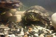 Turtles with big set up bargain price