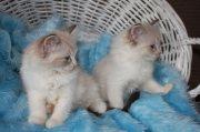 منزل لطيف وجميل ولدت القطط دوول.