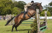 Full Loan Horse For A Confident Rider