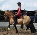 Lovely energetic 12.8 hh horse available to joined new lovely families