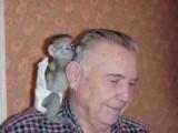 Active Magnificent Capuchin monkeys