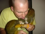 squirrel monkey for re homing now ready